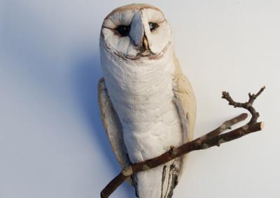 guy-owl